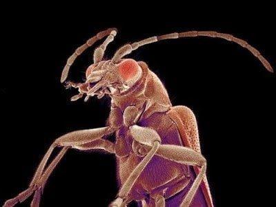 تحت الميكرسكوب : شاهد عالم الحشرات كما لم تراه من قبل ! 12
