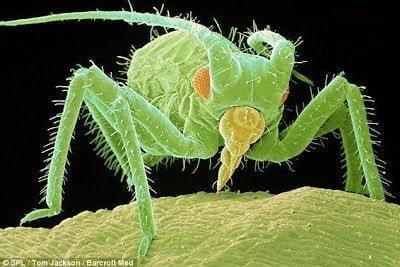 تحت الميكرسكوب : شاهد عالم الحشرات كما لم تراه من قبل ! 15