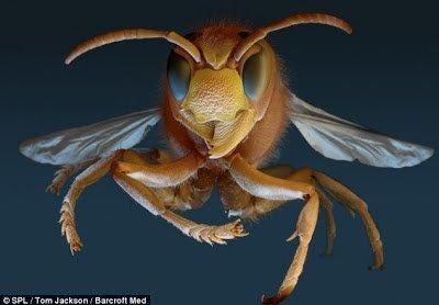 تحت الميكرسكوب : شاهد عالم الحشرات كما لم تراه من قبل ! 5