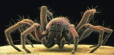 تحت الميكرسكوب : شاهد عالم الحشرات كما لم تراه من قبل ! 6