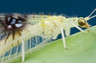 نوع جديد من الحشرات يتم اكتشافه من خلال موقع تواصل اجتماعي 1