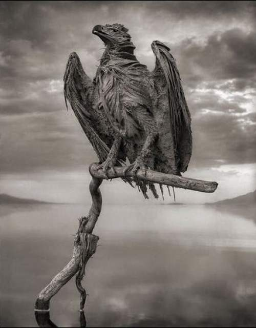 Natron lake calcified eagle