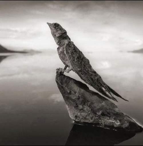 Natron lake calcified swallow