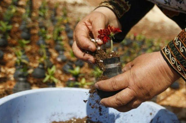 حياة تهزم المأساة : حديقة قنابل الغاز في قرية بلعين بالضفة الغربية ! 4