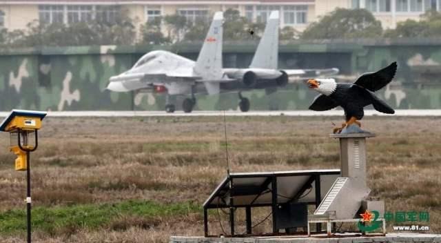 رسمياً : القرود تبدأ خدمتها في سلاح الجو الصيني ! 1