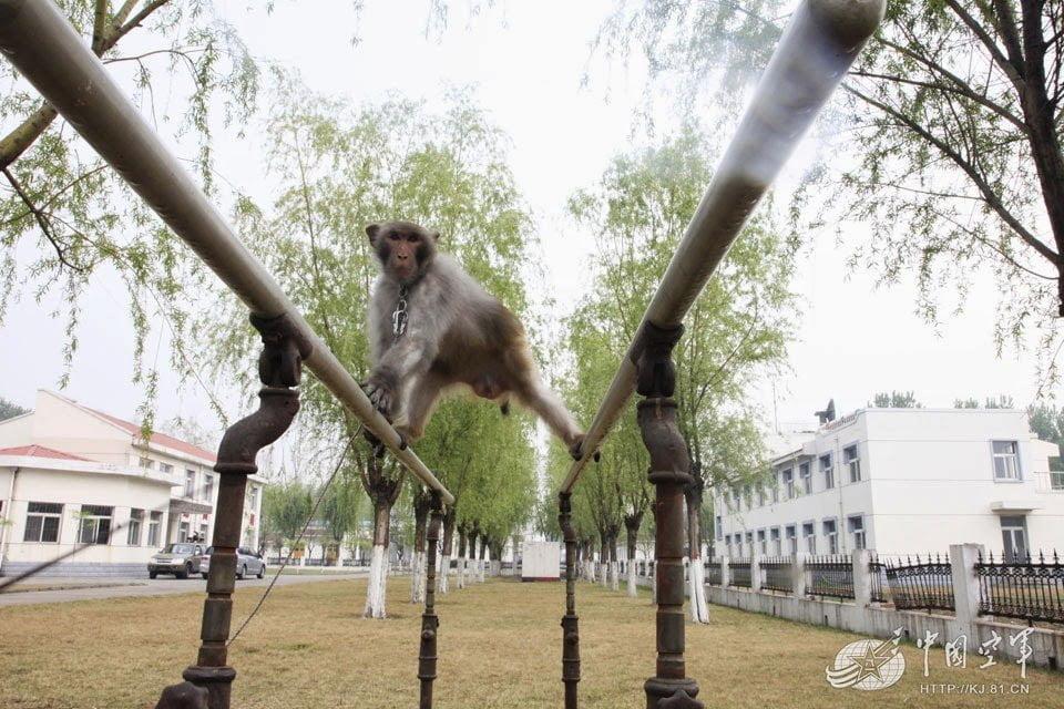رسمياً : القرود تبدأ خدمتها في سلاح الجو الصيني !