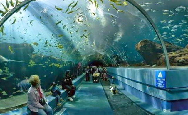 أكبر و أهم 10 أحواض زجاجية للأسماك في العالم ! 3