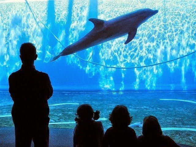 أكبر و أهم 10 أحواض زجاجية للأسماك في العالم ! 10