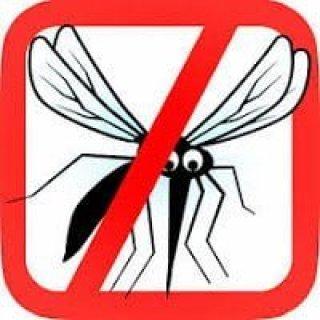 التخلص من الناموس ( البعوض ) بطريقة طبيعية فعالة و آمنة 2