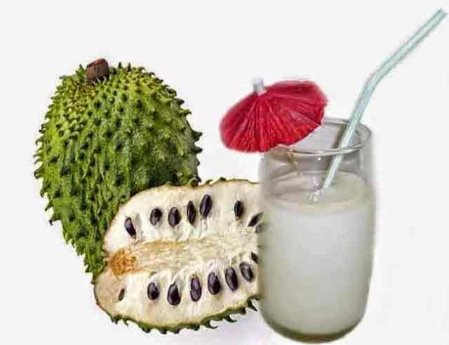 فوائد فاكهة شجرة الجرافيولا أو القشطة و هل حقاً تعالج السرطان ؟ 1