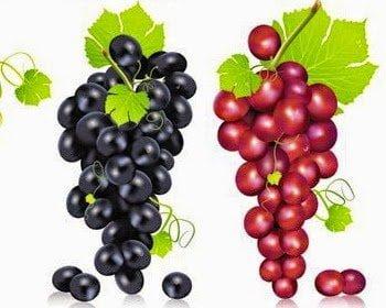تناول العنب الأسود و العنب الأحمر يساعد على حرق الدهون