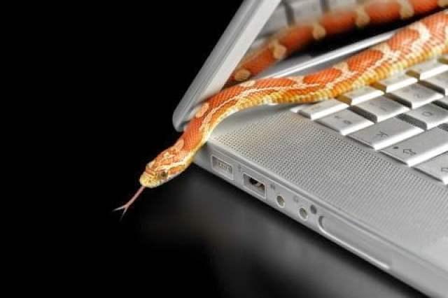الوصايا العشر للحماية من جرائم النصب الإلكتروني ! 4