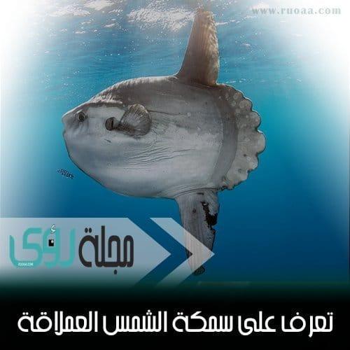 معلومات عن سمكة شمس المحيط أو المولا مولا الفريدة