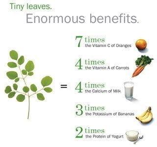فوائد شجرة المورينجا Moringa Oleifera 1
