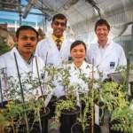 بكتريا تحول النباتات العادية إلى نباتات مقاومة لملوحة التربة 3