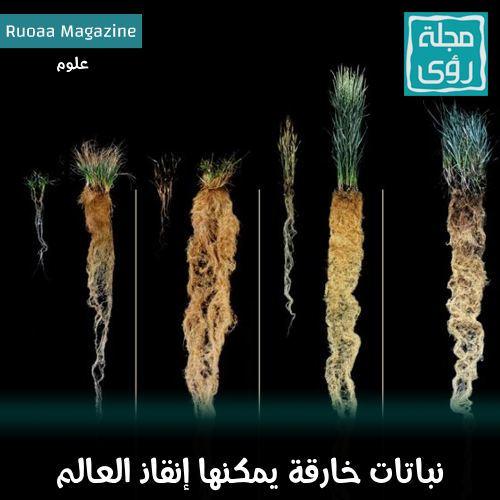 نباتات خارقة يمكنها إنقاذ العالم ! 2