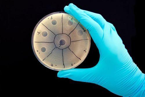 تعرف على الفيروم البشري 5