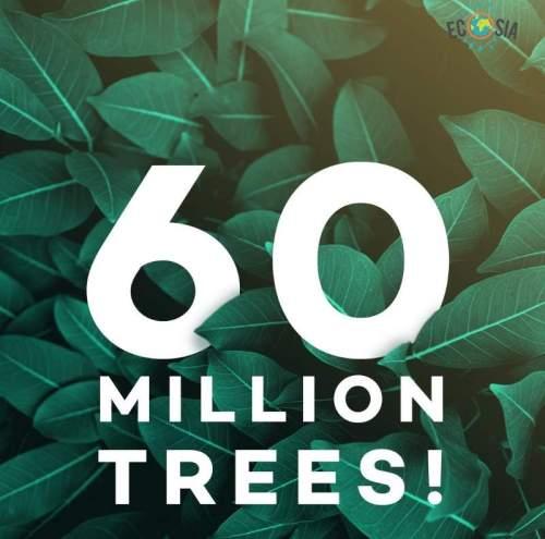 إيكوسيا : محرك بحث يغرس شجرة مقابل كل عملية بحث تقوم بها ! 1
