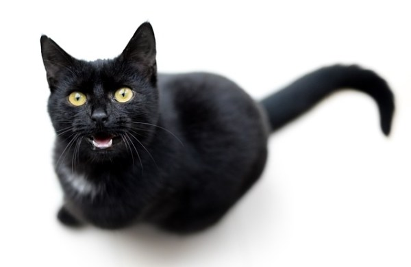 مياو توك : تطبيق يترجم مواء القطط إلى كلمات بشرية