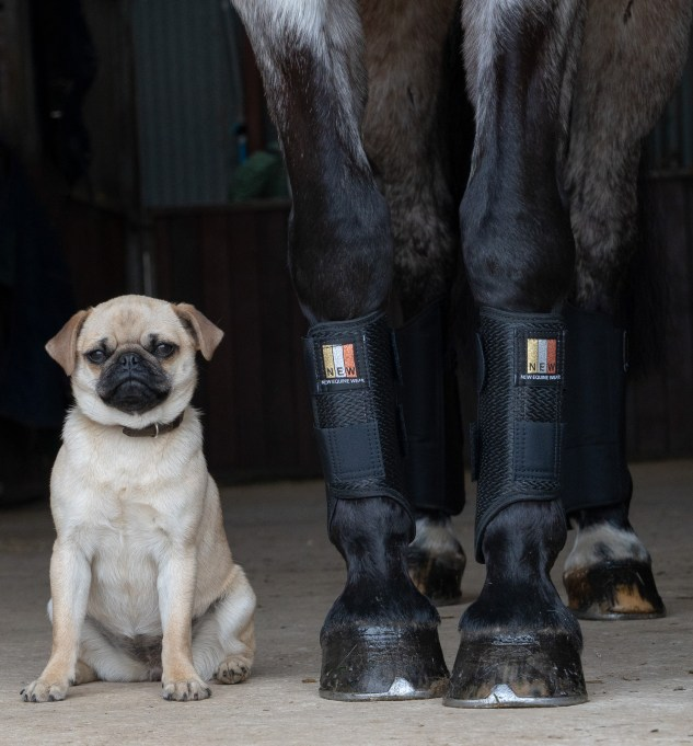 Rupert Gibson Photography Belt Photography Copyright 2019 - -Pug and boots