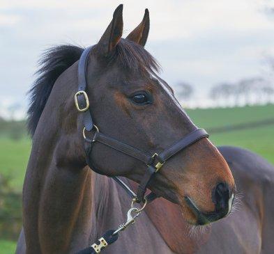 Rupert Gibson Photography - Equestrian - 08 - Woody 2