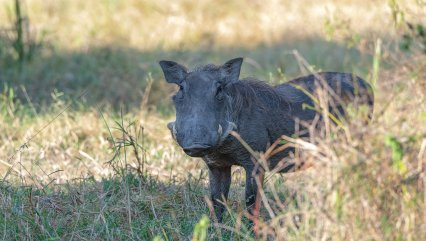 Rupert Gibson Photography - 2018 Tanzania Safari images from the Selous Game Reserve-110