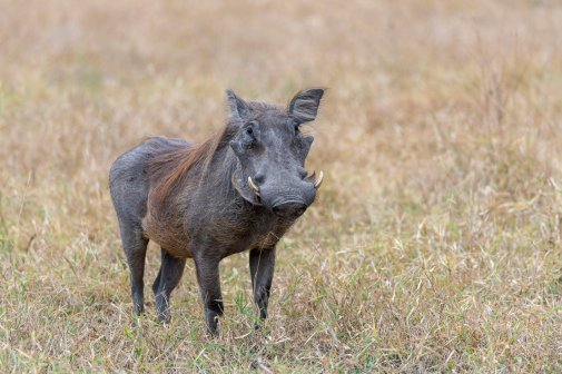 Rupert Gibson Photography - 2018 Tanzania Safari images from the Selous Game Reserve-114