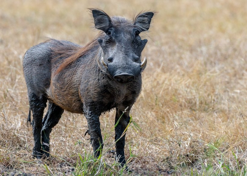 Rupert Gibson Photography - 2018 Tanzania Safari images from the Selous Game Reserve-118
