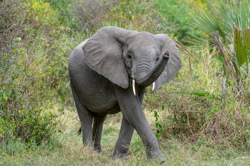 Rupert Gibson Photography - 2018 Tanzania Safari images from the Selous Game Reserve-123