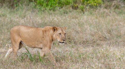 Rupert Gibson Photography - 2018 Tanzania Safari images from the Selous Game Reserve-13