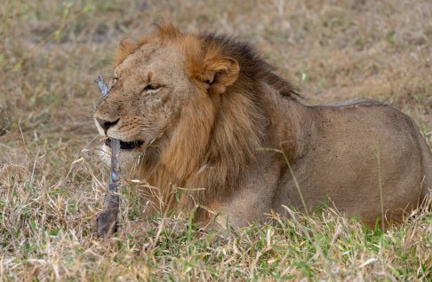 Rupert Gibson Photography - 2018 Tanzania Safari images from the Selous Game Reserve-19