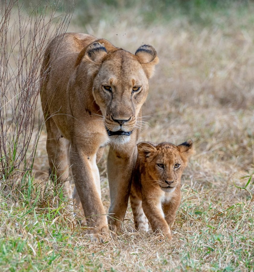 Rupert Gibson Photography - 2018 Tanzania Safari images from the Selous Game Reserve-25