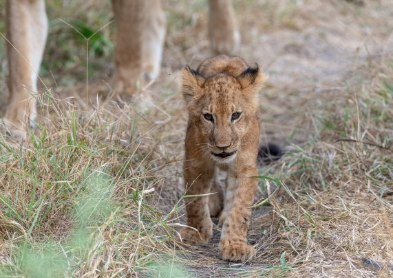 Rupert Gibson Photography - 2018 Tanzania Safari images from the Selous Game Reserve-26