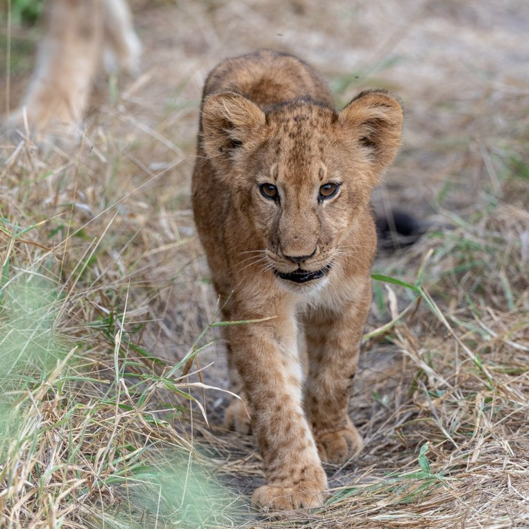 Rupert Gibson Photography - 2018 Tanzania Safari images from the Selous Game Reserve-27