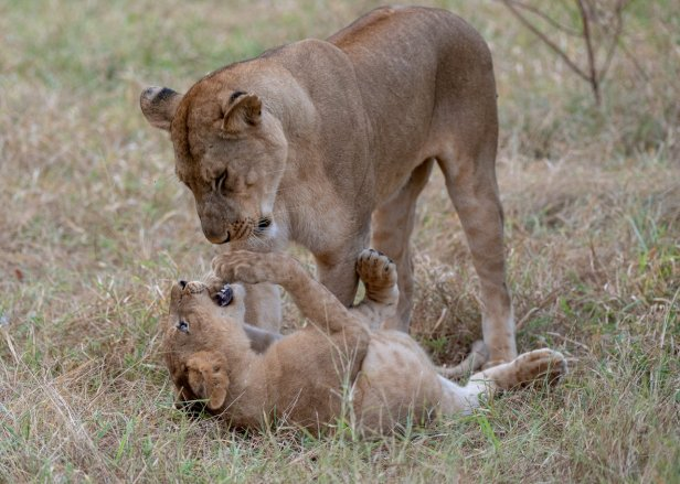 Rupert Gibson Photography - 2018 Tanzania Safari images from the Selous Game Reserve-3