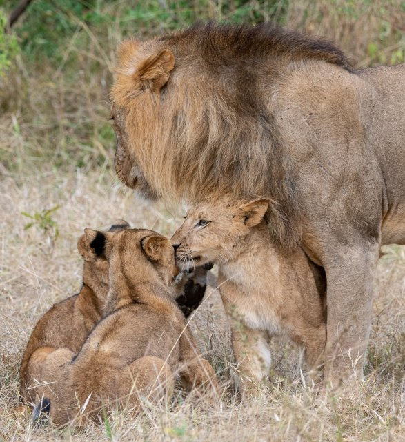 Rupert Gibson Photography - 2018 Tanzania Safari images from the Selous Game Reserve-32