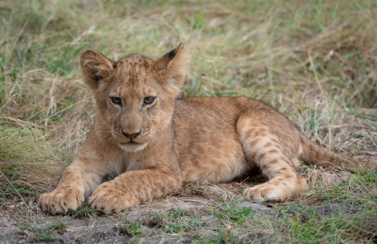 Rupert Gibson Photography - 2018 Tanzania Safari images from the Selous Game Reserve-36