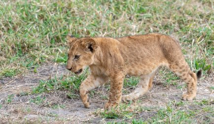 Rupert Gibson Photography - 2018 Tanzania Safari images from the Selous Game Reserve-37