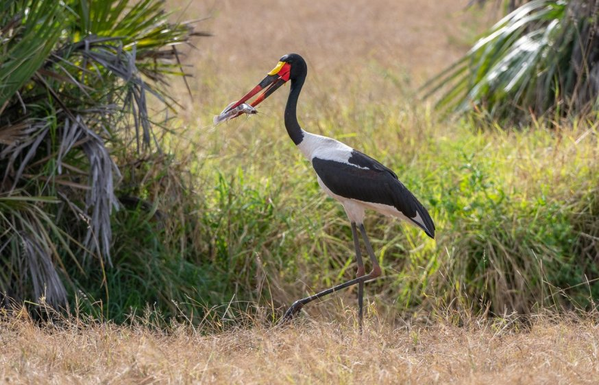 Rupert Gibson Photography - 2018 Tanzania Safari images from the Selous Game Reserve-39