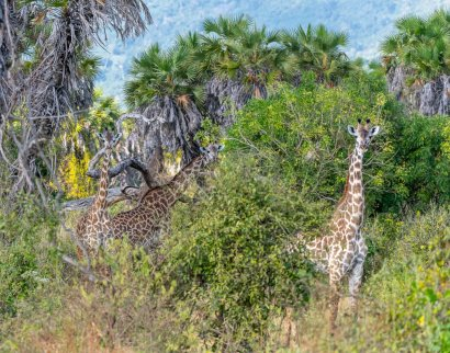 Rupert Gibson Photography - 2018 Tanzania Safari images from the Selous Game Reserve-42