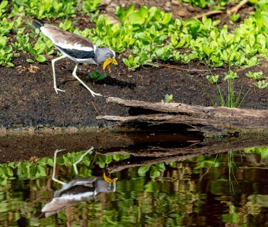 Rupert Gibson Photography - 2018 Tanzania Safari images from the Selous Game Reserve-74