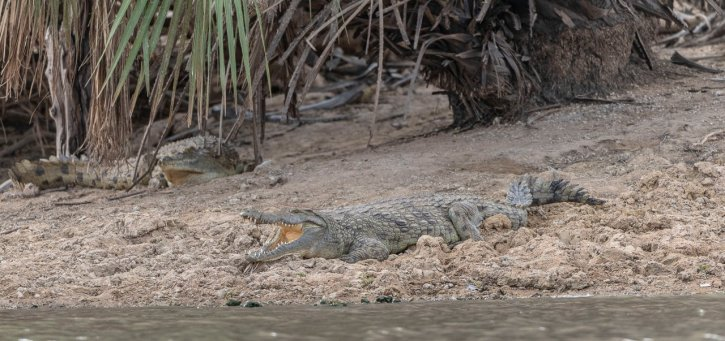 Rupert Gibson Photography - 2018 Tanzania Safari images from the Selous Game Reserve-75