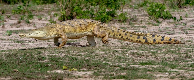 Rupert Gibson Photography - 2018 Tanzania Safari images from the Selous Game Reserve-87