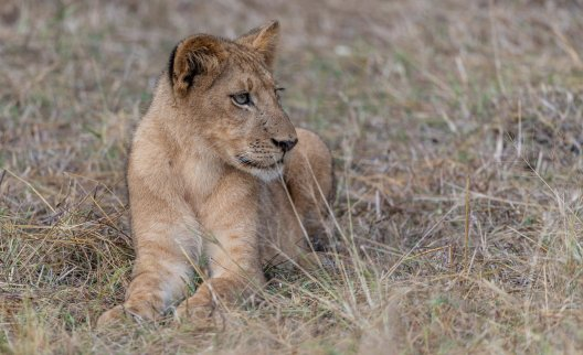 Rupert Gibson Photography - 2018 Tanzania Safari images from the Selous Game Reserve-9