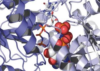 Aus Röntgenkristallographie-Daten modellierte Proteinstruktur eines Teils des SRP-Systems. Foto: Irmgard Sinning, BZH