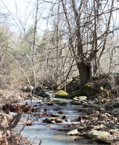 image of trees and creek, for 100 word flash fiction by madison dubois