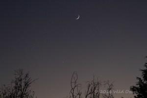 Wild Ozark crescent moon in the western sky.