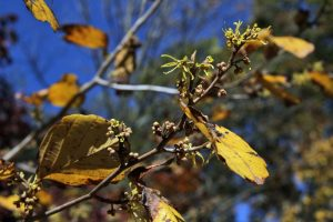 """from the excerpt """"Taste of Witch Hazel"""" by Ima Erthwitch"""