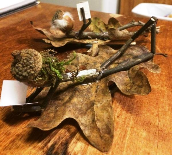 Acorn Folk taking it easy on the kitchen table this morning.