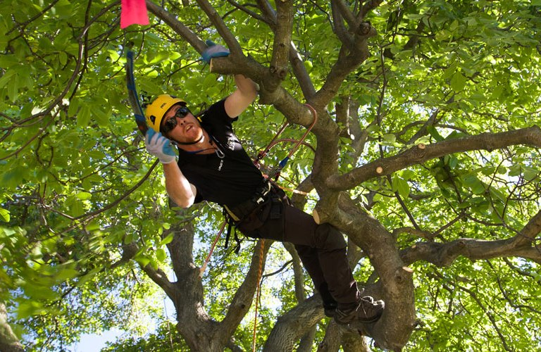 NZ Speed Tree Climbing TransTasman Champs